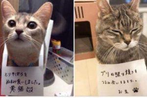 もう可愛すぎるよ!『ごめんにゃさい…。』猫たちの反省文つき懺悔写真12選